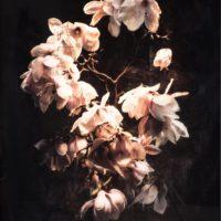 Magnolia Brut Noire lll
