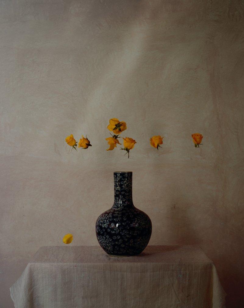 Rose de Qing I