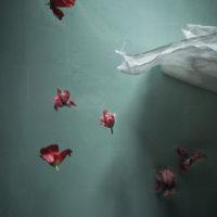 Silence of Gravity V