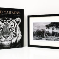 David Yarrow – Limited edition Signed Book including handsigned print
