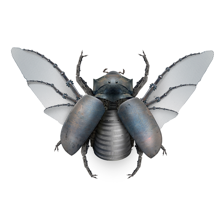 5 Horned Rhino Beetle-female