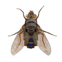 Housefly-Le Pondy