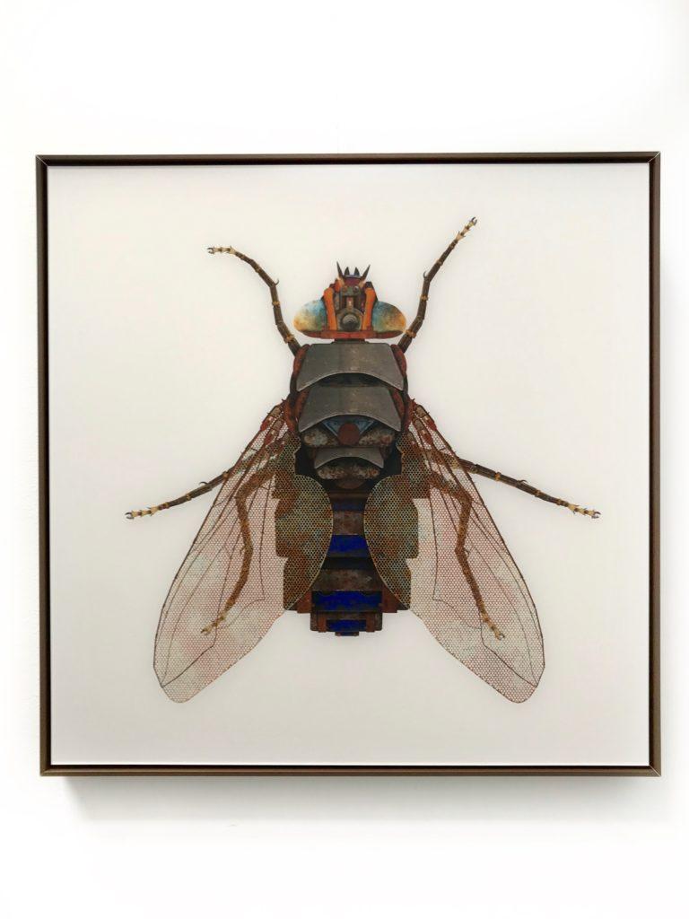 Housefly-Le Pondy