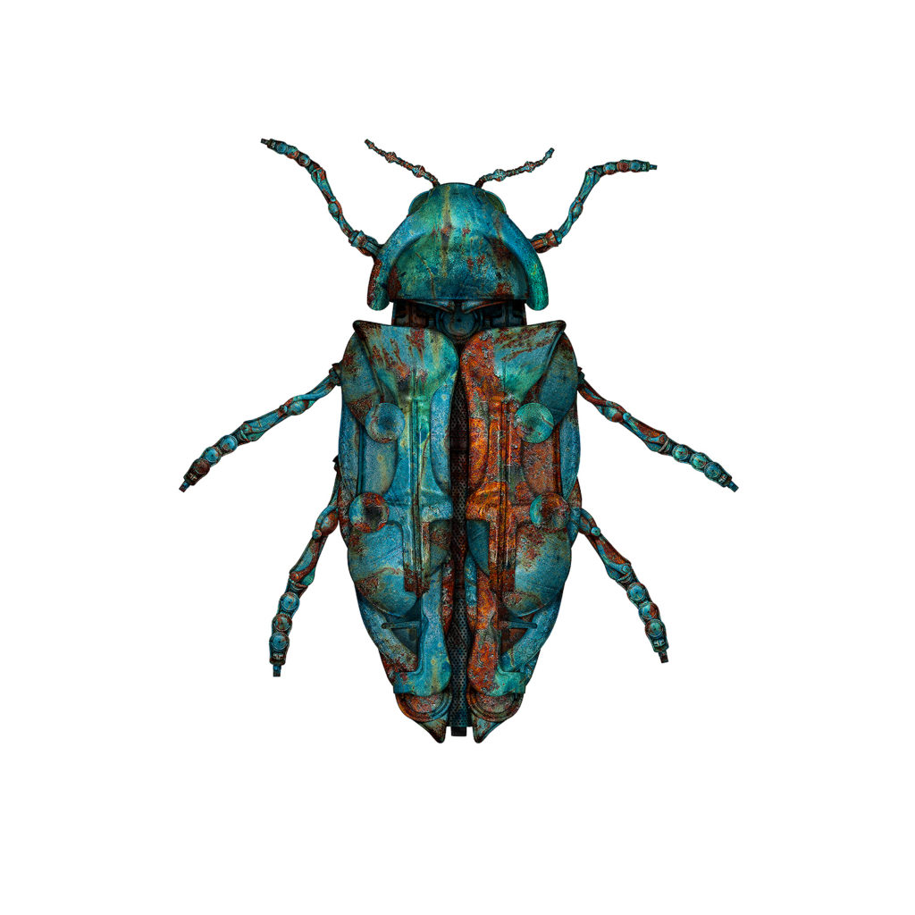 Jewel Beetle 2