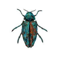 Jewel Beetle 2