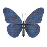 Butterfly II-blue