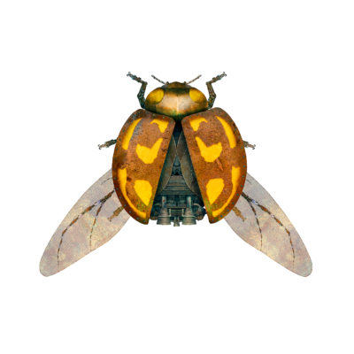 Remi de Ligny- Ladybird