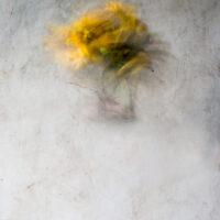 Yellow Untitled I