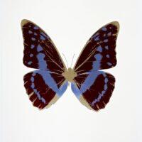 The Souls III – OC7950 Burgundy – Cornflower Blue – Cool Gold