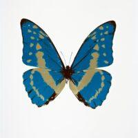 The Souls III –  Turquoise – Cool Gold – Chocolate OC7954