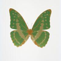 The Souls III – Leaf Green – Cool Gold – European Gold OC7926
