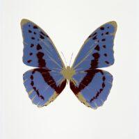 The Souls III Cornflower Blue – Burgundy – Cool Gold OC7930