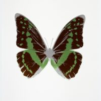 The Souls III Chocolate – Leaf Green – Silvergloss OC7933
