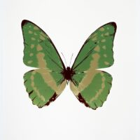 The Souls III Leaf Green – Cool Gold – Burgundy OC7943