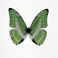 The Souls III Leaf Green – Silver Gloss  – Raven Black OC7945