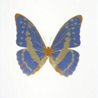 The Souls III Cornflower Blue – Cool Gold – European Gold OC7952
