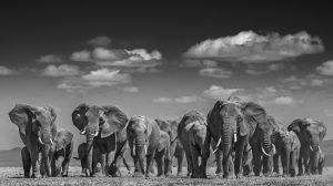 Elephants Uprising